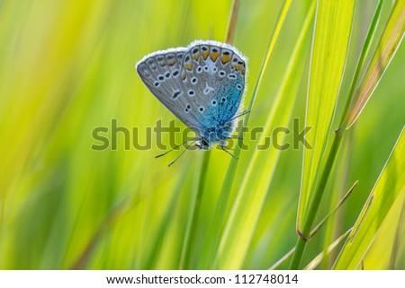 Beautiful small blue butterfly on green grass. Beautiful nature background with shallow depth of field - stock photo