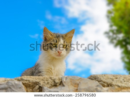 beautiful small cat staring at Hydra island in Greece - stock photo