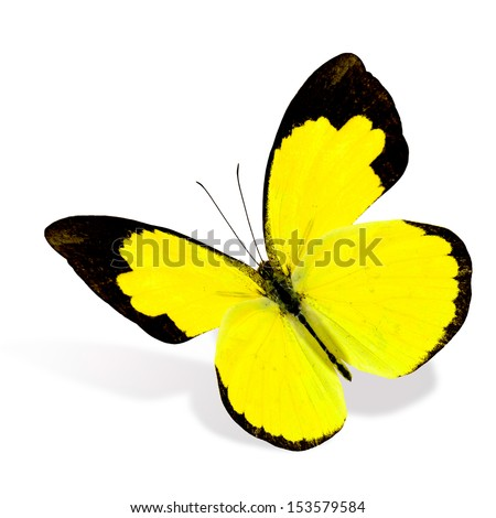 butterfly on yellow color - photo #39