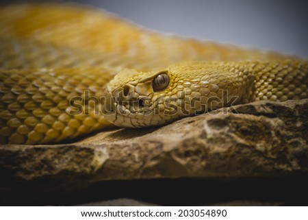 Beautiful snake lying in the sun with fine scales on their skin - stock photo
