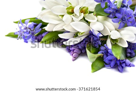 Beautiful snowdrops Galanthus nivalis and Scilla siberica(Siberian squill or wood squill) on white background - stock photo