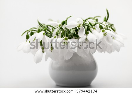 Beautiful snowdrops in a bouquet with details - stock photo