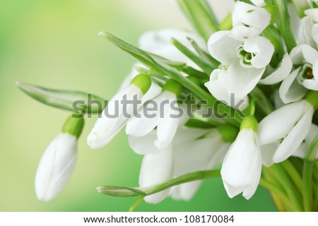 beautiful snowdrops on green background - stock photo