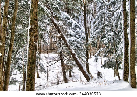 beautiful snowy forest winter landscape
