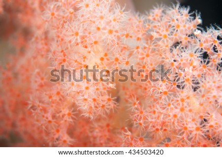 Beautiful soft coral