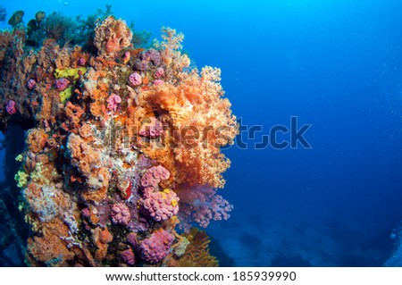 Beautiful soft coral group, Green Island, Taiwan. - stock photo