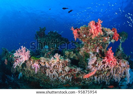 Beautiful soft coral underwater - stock photo