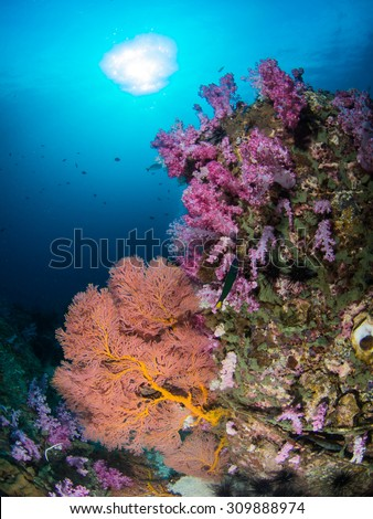 Beautiful soft corals and sunburst , Koh Lipe , Satun , Thailand - stock photo