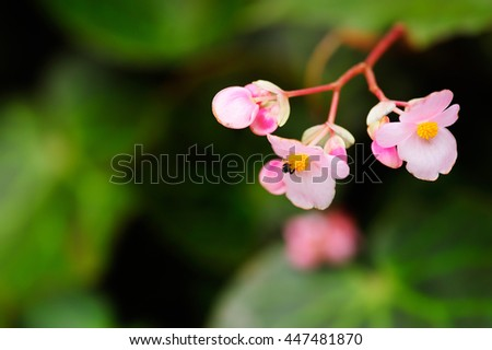 Beautiful soft focus of tiny light pink flowers bloom on shadow natural background - stock photo