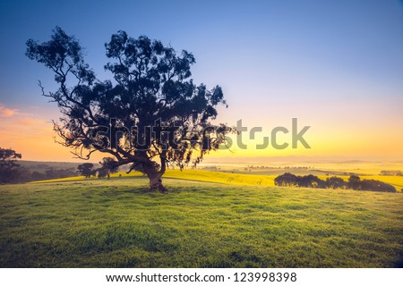 Beautiful South Australian sunrise over rural field - stock photo