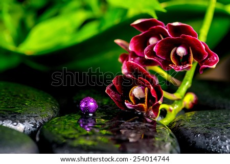 beautiful spa background of dark cherry flower orchid phalaenopsis, zen basalt stones with drops and lilac beads - stock photo