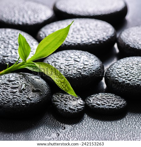 beautiful spa background of green branch bamboo on zen basalt stones with dew, closeup