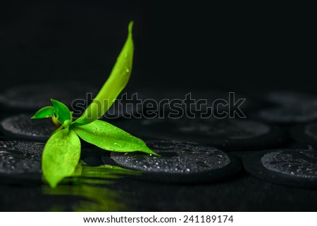beautiful spa background of green branch bamboo on zen basalt stones with drops in ripple reflection water - stock photo