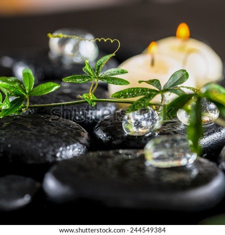 beautiful spa background of green twig passionflower with tendril, ice and candles on zen basalt stones with drops, closeup - stock photo