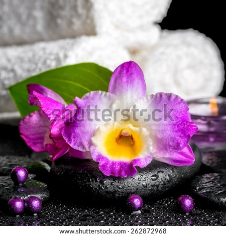 beautiful spa background of orchid dendrobium, green leaf, candles, white towels and beads on zen stones with drops, closeup   - stock photo