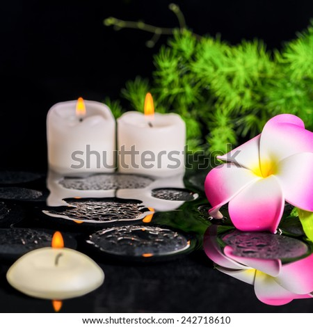 beautiful spa background of plumeria flower, green branch Asparagus with drops and candles on zen basalt stones in reflection water, closeup - stock photo