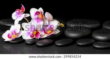 beautiful spa background of purple orchid phalaenopsis on black zen stones with drops, panorama - stock photo
