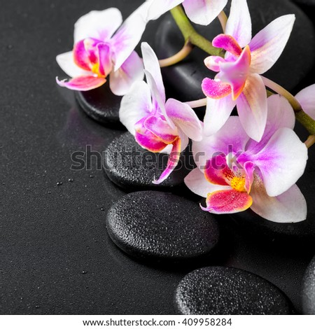 beautiful spa composition of orchid phalaenopsis on black zen stones with drops, close up - stock photo
