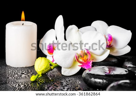 beautiful spa concept of blooming white and red orchid flower, phalaenopsis with dew and candle on black zen stones - stock photo