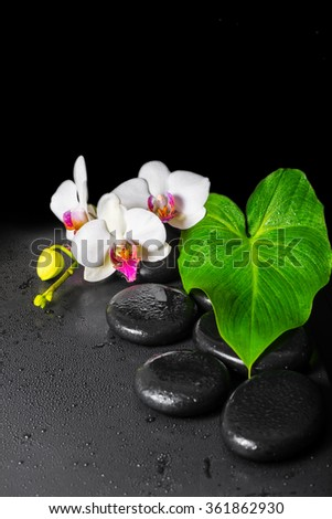beautiful spa concept of blooming white and red orchid flower, phalaenopsis with dew and green leaf on black zen stones - stock photo