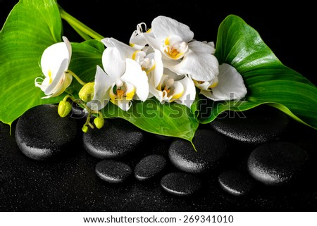 beautiful spa concept of blooming white orchid flower, phalaenopsis, green leaf with dew on black zen stones - stock photo