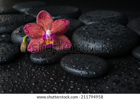 Beautiful spa concept  of dark purple orchid (phalaenopsis) on zen stones with drops, closeup - stock photo