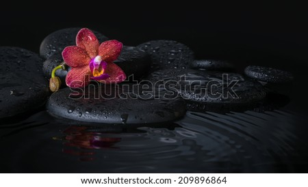 Beautiful spa concept  of deep purple orchid (phalaenopsis) with bud, zen stones with drops on ripple water, closeup - stock photo