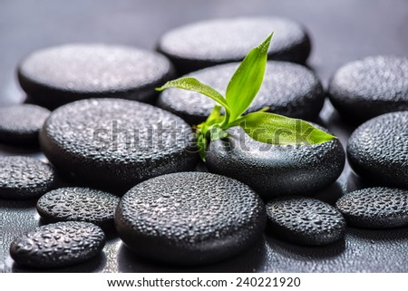 beautiful spa concept of green branch bamboo on zen basalt stones with drops - stock photo