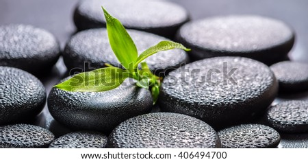 beautiful spa concept of green branch bamboo on zen basalt stones with drops, panorama  - stock photo