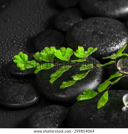 beautiful spa concept of green twig fern, ice on zen basalt stones with dew, closeup - stock photo