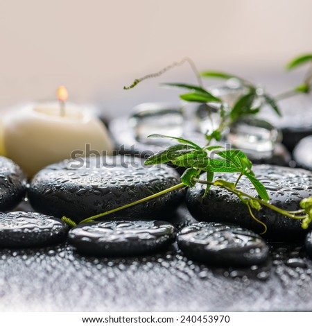 beautiful spa concept of green twig passionflower with tendril, ice and candles on zen basalt stones with dew, closeup - stock photo