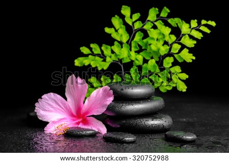 beautiful spa concept of pink hibiscus flower, fern branch and stones pyramid with drops, closeup - stock photo