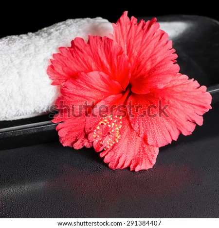 beautiful spa concept of red hibiscus flower with dew and white rolled towel, closeup