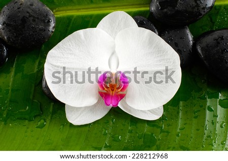 Beautiful spa concept of zen stones ,orchid  on the big green leaf,