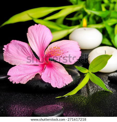 beautiful spa setting of pink hibiscus flower, twigs bamboo and candle on zen basalt stones with dew, closeup - stock photo