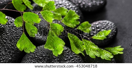 beautiful spa still life of green twig Adiantum fern on zen basalt stones with dew, panorama  - stock photo
