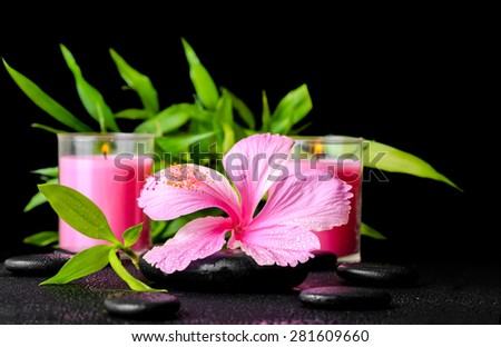beautiful spa still life of pink hibiscus flower, twig bamboo and pink candle on zen basalt stones with dew, closeup - stock photo