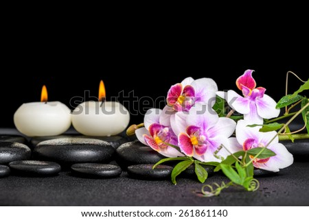 beautiful spa still life of purple orchid phalaenopsis green twigs and candles on black zen stones with drops, closeup   - stock photo