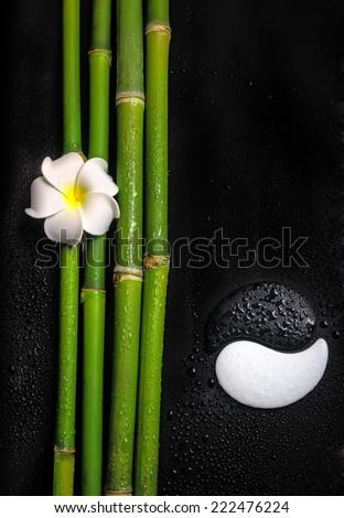 beautiful spa still life of symbol Yin Yang, frangipani flower and natural bamboo stems with dew - stock photo