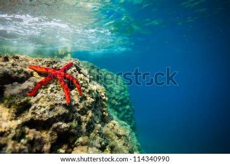 beautiful spotted red starfish on rock in shallow water