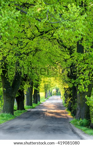 Beautiful spring asphalt road and tree alley. Spring rural landscape. Spring alley. Spring trees. Green spring trees in rural countryside landscape. Beautiful Czech highland countryside - stock photo