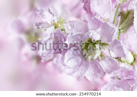 Beautiful spring background with flower bouquet - stock photo