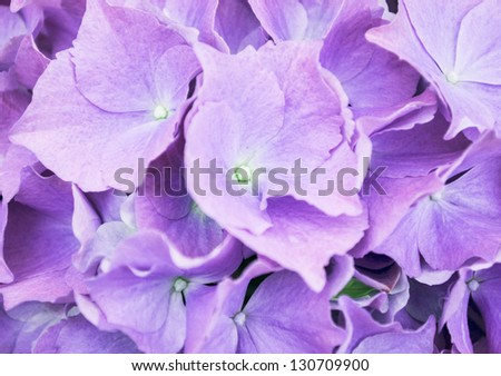 Beautiful spring background with fresh purple flowers