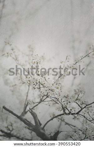 Beautiful spring blossom artwork with canvas texture. - stock photo