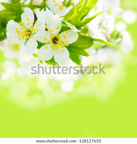 Beautiful spring bokeh for design with copyspace - stock photo