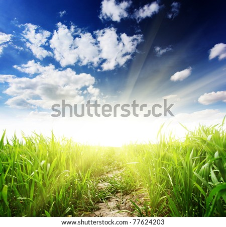 Beautiful spring field with a green grass and the beautiful sky - stock photo