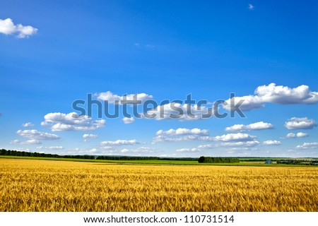 Beautiful spring field with the blue sky - stock photo