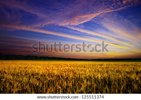 Beautiful spring field with the blue sky