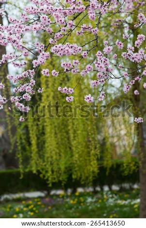 Beautiful spring floral background in a park, with colorful tree blossoms -selective blur - stock photo