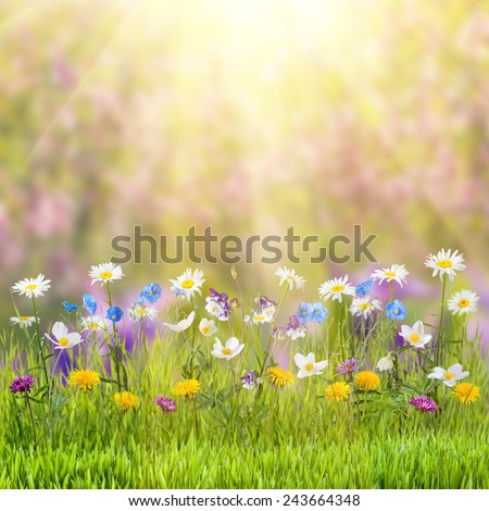Beautiful spring floral meadow with wild flowers - stock photo